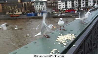 feed seagulls frankfurt skyline slo