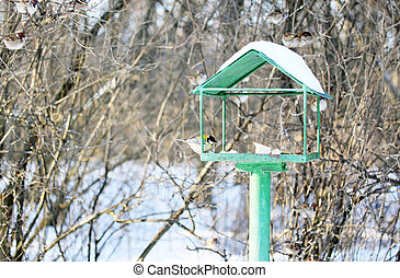 Feeder for birds - Feeder for wild birds in the park
