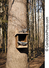 Feeder for birds