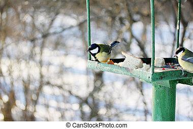 Feeder for wild birds