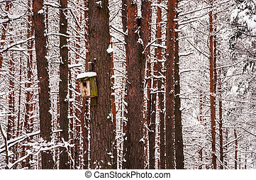 Feeder on the tree