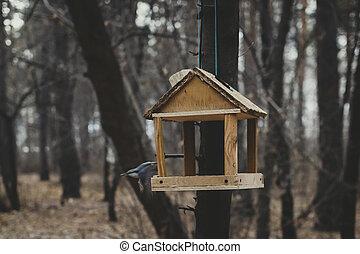 Feeders for birds