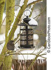 Feeding a Blackbird in the Winter