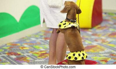 Feeding a circus dog - Circus dog in gratitude feed