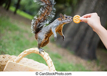 Feeding a squirrel in the park