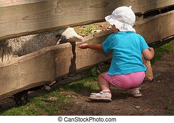Children feeding little goats in the zoo