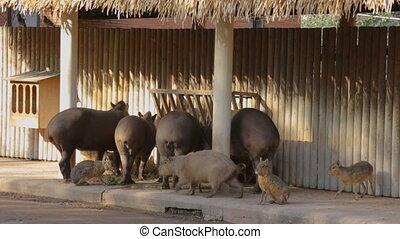 Feeding animals in zoo