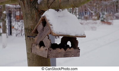 Feeding birds at winter season with wooden bird-feeder on...