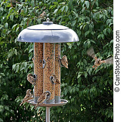 Feeding - Birds feeding at large feeder and one coming in...