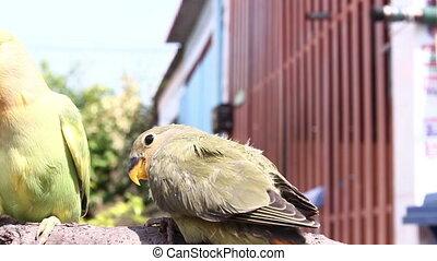 feeding birds on branch - feeding baby birds on branch