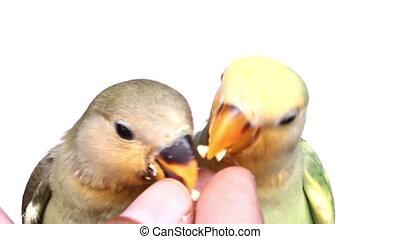 feeding birds on isolated