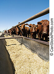 Feeding bunks on a farm in Saskatchewan