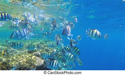 Feeding Colorful Fish in the Red Sea. Colored Fish Floating near the Coral Reef. Slow Motion