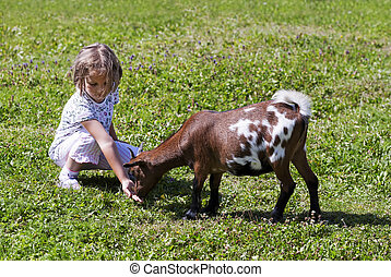 Little girl (6 years old) feeding goat on farm.