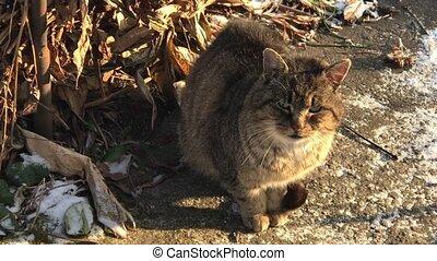 Feeding homeless cat, especially in winter