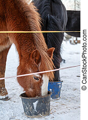 Feeding of horses in  pasture