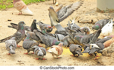 Feeding pigeons in the park