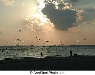 Feeding Seagulls at sunset, Ft. Myers Beach Florida.