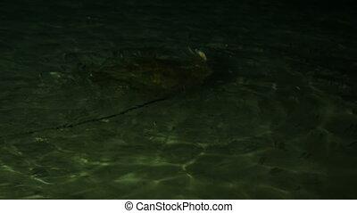 Feeding sharks, rays and fish from the shore. Maldives. 4k