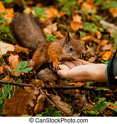 feeding squirrel from hand in a park