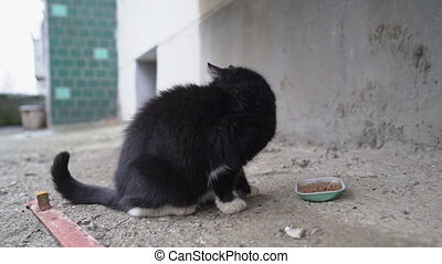 Feeding stray cats. Stray cat eating wet canned food for...