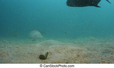 Feeding the beasts on the ocean floor - A shot on the ocean...
