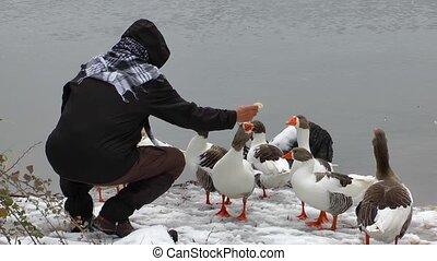 Feeding the Goose near the Lake in Winter