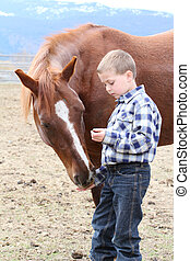 Feeding treats - Young boy in blue feeding his horse treats
