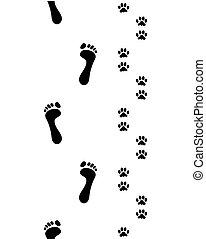 feet and dog paws