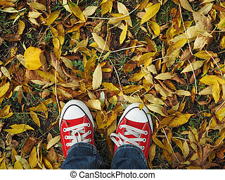 Feet in red sneakers on the background of autumn leaves, top view, informal style