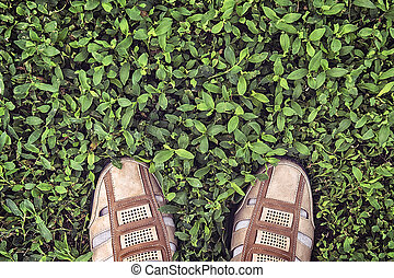 feet in shoes on the grass top view
