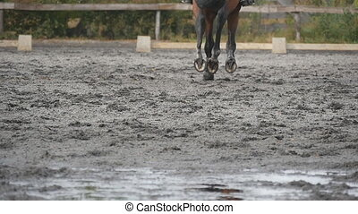 Feet of horse running on mud. Close-up of legs of stallion jogging at the wet muddy ground. Close up of paws galloping. Slow motion