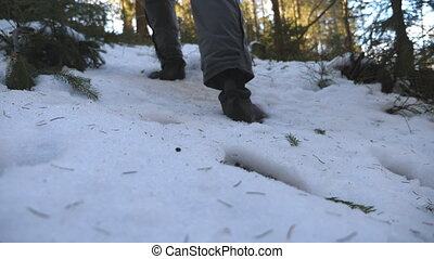 Feet of unrecognizable man walking on snow mountain forest in morning. Young hiker climbing on snowy slope in winter. Healthy active lifestyle. Travel or journey concept. Rear back view Slow motion