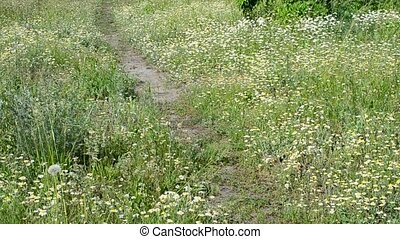 Feet of young man in blue jeans walking on path in meadow