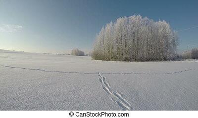 Feet tracks on snow on sunny day