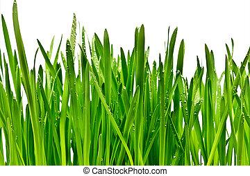 fehér, fű, elszigetelt, háttér