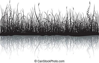 fehér, fű, -, elszigetelt