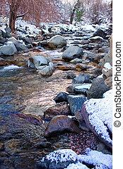 fehér, folyó, colorado, nemzeti erdő