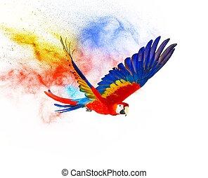 fehér, repülés, színpompás, elszigetelt, Papagáj