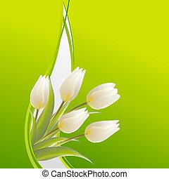 fehér, tulipánok, képben látható, egy, zöld, kártya, helyett, születésnap