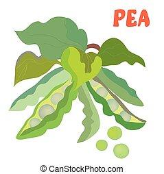 feijões, ervilha verde, ilustração
