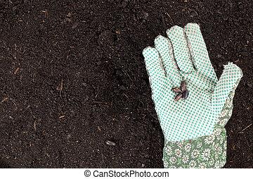 feijões, mão