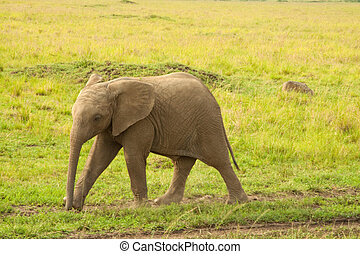 Feisty Young Elephant