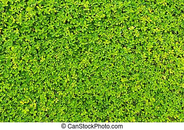 feito, cerca, natureza, leaves., experiência verde
