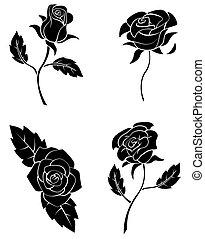 fekete, árnykép, gyűjtés, rózsa
