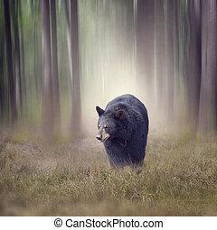 fekete medve, alatt, a, erdő