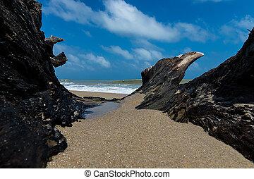 fekete, tengerpart., öreg, faanyag
