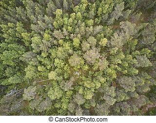 felülnézet, közül, erdő, alatt, karelia