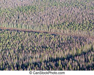 felülnézet, közül, erdő