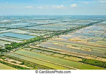felülnézet, közül, rizs terep, terasz, alatt, thaiföld